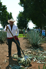 Tequila Jalisco (Vggirl) Tags: sculpture field mexico tour shots pueblo jalisco tequila escultura fields agave tradition campos cuervo magico jimador