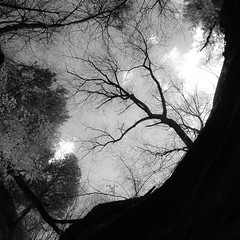 In Canyons 095 (noahbw) Tags: trees shadow sky blackandwhite bw abstract monochrome silhouette rock stone clouds forest square landscape blackwhite spring woods nikon natural branches canyon cliffs starvedrockstatepark d5000 auroracanyon noahbw