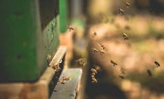Viel Verkehr... (David Go ~) Tags: sunlight macro nature germany many bees natur bee makro beehive viel biene tamron90mm bienen apiary sonnenlicht bienenstock davego bienenhaus davidgo canoneos6d projekt2016