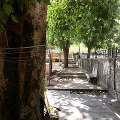 banyan-tree-photo-taken-from-iphone-udaipur (uttam bhaskar) Tags: udaipur iphonephoto iphonepic iphone6 iphoneonly seoudaipur