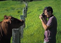say mooh _c (gnarlydog) Tags: portrait green field rural outdoors cow photographer australia fenceline adaptedlens kodakektar25mmf19