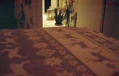 Villaciervos (Noviembre) Tags: test film night analog 35mm analgica room deer canonet28 filmisnotdead stillbelieveinfilm