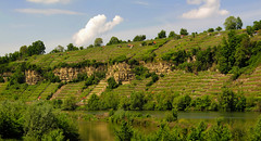 Vineyard at steep slope at the Neckar, Ludwigsburg, Baden-Württemberg, Germany (Batikart) Tags: urban panorama plant green nature field grass lines rock rural canon germany landscape geotagged deutschland vineyard spring flora europa europe pattern stitch loop natur may vine sunny line mai limestone gras geology grün agriculture curve ursula sonnig landschaft muster neckar grapevine ludwigsburg frühling weinberg felsen sander kurve g11 weinstock 2016 badenwürttemberg frühjahr steilhang poppenweiler biotope biotop 100faves steepslope 200faves neckarschleife kalkfelsen batikart canonpowershotg11