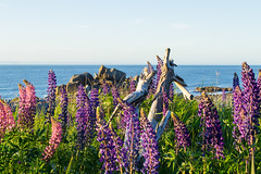 Bay of Fundy (kevin_kornelsen) Tags: ocean blue nature water outdoors nikon seascapes scenic d3100