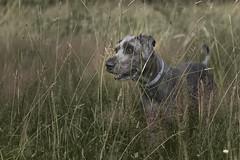 Benni 635 (Joerg Marx) Tags: light dog licht hund brullsen