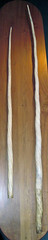 Narwhal ivory tusks 2 (James St. John) Tags: narwhal narwhals ivory tusk gem gemstone gemstones gems biogenic monodon monoceros whale whales toothed odontocete odontoceti cetacea cetacean cetaceans