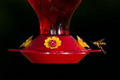 174-366-3 (garyinhere) Tags: bird oklahoma outside wasp unitedstates sony flash feeders fargo bokah a99