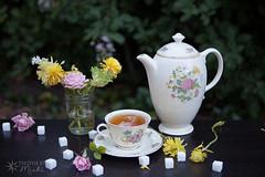 Tea (Photos By Michi) Tags: pink flowers stilllife flower nature rose yellow garden tea outdoor naturallight peony sugar sugarcube teapot teacup afternoontea arrangement teaparty