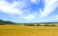 West Dean, Wiltshire, England (east med wanderer) Tags: england uk wiltshire downland crops cereals