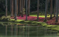 Tarde (Serlunar (tks for 4.6 million views)) Tags: red brazil naturaleza lake green nature brasil palms lago photo flickr minas gerais foto no natureza sombra arvores reflexion reflexo troncos entardecer inhotim serlunar