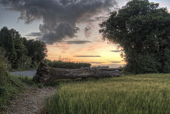 End of the Path, Winchester, UK (neilalderney123) Tags: sunset tree barley farm winchester sparsholt 2016neilhoward 2016neilhoward pathmtrack