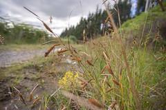 Craigower, Pitlochry (Gordon Haws) Tags: perthkinross highlands perthshire pitlochry scottishsummer beautifulscotland centralhighlands tummelvalley lochsandglens oldnorthroad craigower craiglunie plantation forest pineforest