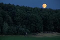 full moon rising (Norbert Kaiser) Tags: mond vollmond mondaufgang nacht nightearth earthnight elbsandsteingebirge schsischeschweiz wald moon fullmoon
