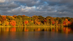 October (Bob90901) Tags: october massapequapreserve longisland newyork autumn rpg90901 fall fallcolors fallfoliage morning 2015 outdoor trees water pond nassaucounty lseries canon 6d canonef24105mmf4lisusm light color