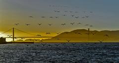 birds (DROSAN DEM) Tags: composition compo bird aves golden gate san francisco usa california