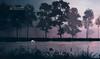 365/365 The shadow is always black even a white swan (ruialmeidaphotography.com) Tags: wallpaper background silhoeta silhouette backlighting contraluz backlight fineart creative nightshoot shadows romantic loveliness illusion winter cold portfolio shadow silhoetas blackandwhite bw nb minimalisme elegant poeticimage walkingintherain minimalist dreamcatcher bookcover swan whiteswan river sunset dawn fog