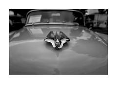 Cadillac No. 2: The Age of Pretension (Richard C. Johnson: AKA fishwrapcomix) Tags: leicaq summilux28mm f17 digital paxamericanus endofempire cloquet minnesota civisromanussum blackandwhite bw balckandwhite photoborder tomwolfe thekandykoloredtangerineflakestreamlinebaby monochrome chrome classic cadillac automobile hoodornament collectable carshow laborday vehicle carporn motorcity detroitwheels eyecandy outdoor parkinglot classiccar reflections madeinusa wetzlarmojo deutschemagic reddot