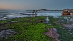 Green Carpet (RoosterMan64) Tags: australia landscape monavale nsw rockshelf seascape sunrise newport newsouthwales au longexposure leefilters