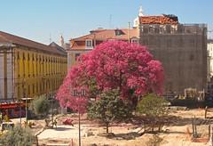 NIRVANA TREE (Honevo) Tags: honevo hnevo tree nirvana nirvanatree