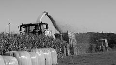 Corn silage in Plouguin (in explore) (patrick_milan) Tags: plouguin ploudalmezeau portsall kersaint landunvez landeda lannilis treglonou saintpabu pabu abers finistre brittany bretagne bzh corn harvester ensileuse tractor tracteur ensilage mas silage noiretblanc blackandwhite noir blanc monochrome nb bw black white
