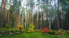 #осень #природа #Молодежное #spb