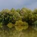Danube Delta, Backwater Sireasa