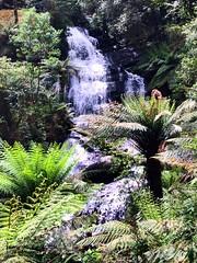 Triplet Falls (Christine Amherd) Tags: water creativity waterfall wasser wasserfall melbourne victoria falls np australien ine passionate otway austraila otwaynationalpark mypassion otwaynp tripletfalls christinescreativityphotography christinesphotography