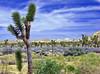 Joshua Tree Grove, JT NP 4-13 (inkknife_2000 (8.5 million views +)) Tags: usa landscape desert joshuatree skyandclouds joshuatreenationalpark yuccaplant rockpiles dgrahamphoto