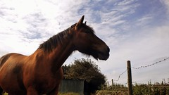 PA018142 (2) (E.Hphotography) Tags: light sky horses horse nature beautiful beauty animal animals clouds countryside amazing view awesome stunning equine