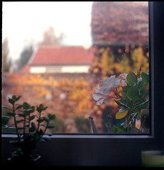 View through my Living Room Window (manni39) Tags: 120 6x6 film window mediumformat square fenster yashica twinlensreflex rollfilm fujicolor twinlens yashinon mittelformat moyenformat yashica12 yashinon80mm35