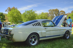 Ford Mustang, GT350, 1966, Fastback (Anna Calvert Photography) Tags: auto ford car automobile paint display australia 1966 transportation vehicle canberra mustang fordmustang carshow sportscar fastback 2014 gt350 johnknightpark