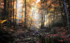 it's magic (huetteberg) Tags: autumn herbst wald harz mrchenwald globalaward2014