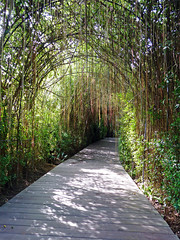 Garden Archway (brentflynn76) Tags: trees light shadow green garden botanical thailand vines arch path archway phuket