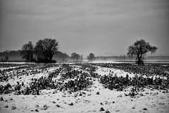 Jahresendlandschaft (Peters Picture) Tags: blackandwhite bw freiburg schwarzweiss rieselfeld