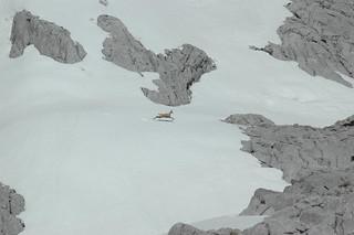Spain Ibex Hunt & Driven Partridge Hunts 43