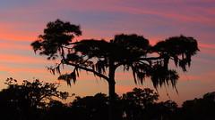 January 3rd sunset (Jim Mullhaupt) Tags: pink blue sunset red wallpaper orange sun color tree weather silhouette yellow pine landscape evening nikon sundown florida dusk palm tropical coolpix bradenton p510 brokenpine mullhaupt cloudsstormssunsetssunrises jimmullhaupt
