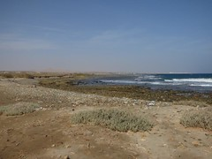 Bassa marea (96) (Naturalmentescienza) Tags: rosa acacia aquila granchio salicornia airone spinosa beccaccia cormorano spatola mangrovia tamerice