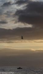 IMG_8971.jpg (selwyn.levitan) Tags: africa bird beach sunrise southafrica location eastcoast durban kwazulunatal horizonoverwater