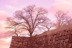 [Explored] Harmonia - D3s & Nikkor 60mm Micro (TORO*) Tags: park sky macro tree castle japan ed nikon explore diagram micro osaka 28 af 60mm nikkor f28 60 afs f28g explored d3s