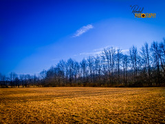 Reaching The Blue Sky (Randall ]|[ Photography) Tags: blue trees winter sky orange nature beautiful composition contrast wonderful landscape amazing nice fantastic md pretty colours superb good awesome maryland compo clear fabulous incredible tones easton unitedstate olympusepl1