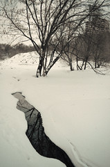 (irinayourova) Tags: trees winter white snow cold reflection nature river landscape frozen snowfall