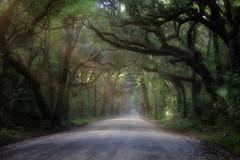 In The End (karenhunnicutt) Tags: road southcarolina roadtrip charleston journey botanybayroad karenmeyere karenhunnicutt karenmeyer karenhunnicuttphotographycom minneapolisfineartphotographer