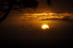 Daily Decisions (West Leigh) Tags: sunset sun beauty birds clouds oregon sunrise fly washington northwest dream wanderlust explore pacificnorthwest oregoncoast naturalbeauty inspire