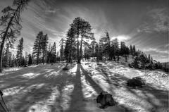 Yosemite B/W (adam.matsumoto) Tags: winter blackandwhite bw snow nationalpark nikon yosemite yosemitenationalpark deweypoint