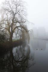 Mistige Maandag Morgen (Olga and Peter) Tags: foggy nederland thenetherlands monday mistig maandag watergraafsmeer linaeuskade fp1030032