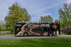 no lips-D827934 (southfacing) Tags: trees grass starfish busdriver pavement teeth dandelion passenger greengrass tourbus dinosaurpainting theropod