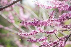 Spring has Sprung (twinsfan7777) Tags: flowers flower tree rain minnesota spring branch arboretum flowering springflowers sprung universityofminnesota springrain universityofminnesotaarboretum