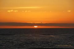 5-15-16 (255) California Sunset!! (KatieKal) Tags: california orange santacruz bird clouds gold spring seagull may canon60d