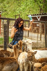 They're Everywhere (sapere18) Tags: spring tennessee april rocio sevierville 2016 deerfarm
