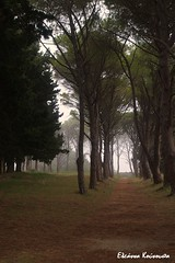 (Eleanna Kounoupa) Tags: trees forest mediterranean greece rodos   filerimos dodecaneseislands